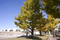 駒沢公園の紅葉